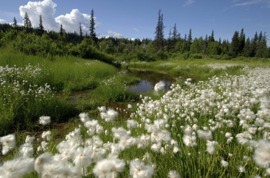 Alaskan Meadow (c) Aramark Parks & Destinations