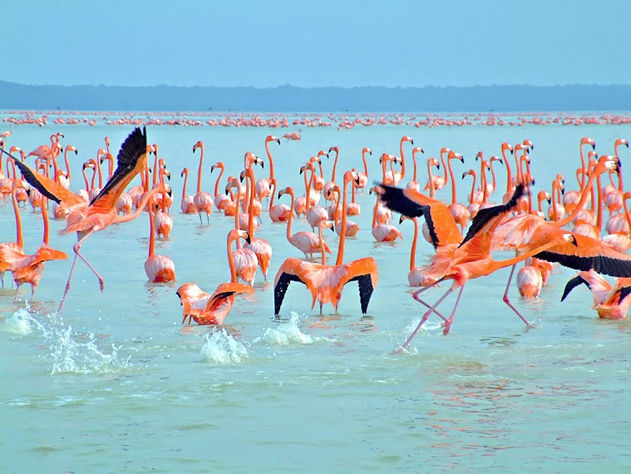 Ría Celestún, Campeche, yucatan, ANP, reserva biosfera
