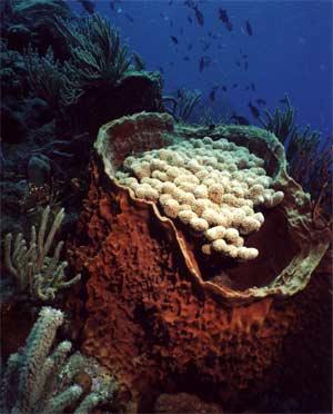 Some scuba in Saba