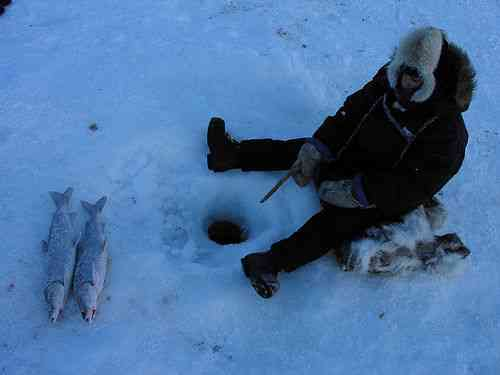 An Inuit Fishes