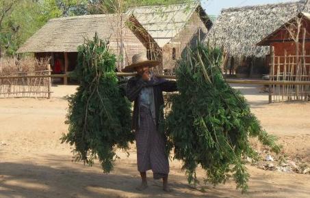 A familiar sight in a Burmese village