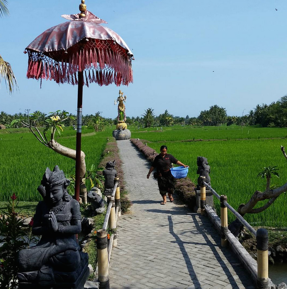 Dining in the rice field on satay and smoked fish